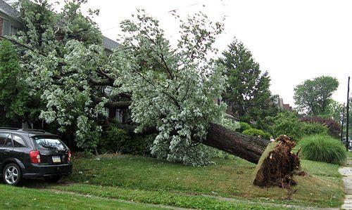 Storm_uprooted_PlumsteadAv